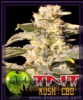 Eva TNT Kush CBD Female 3 Marijuana Seeds